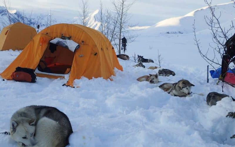 Dogs camping in winter
